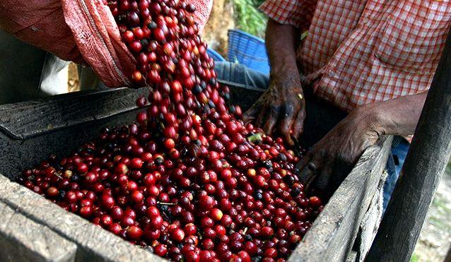 Coffee grinding millstone - Las Terrazas - Authentic Cuba