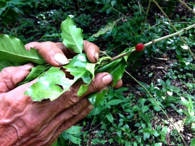 coffee plantation tour at La Magdalena, Nicaragua