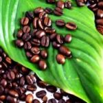 Organic espresso beans: why you need to care