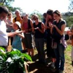 Kona coffee tours and tastings – coffee farms round the big island of hawaii of hawaii (list)
