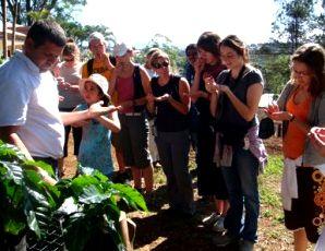 Espiritu Santu Coffee Plantation Tour