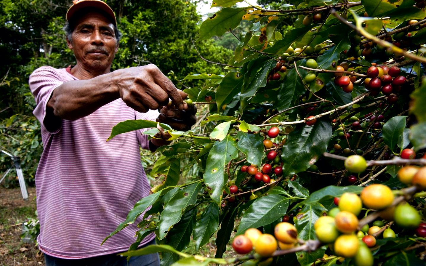Sustainable coffee challenge- conservation worldwide stimulating curiosity about sustainable coffee
