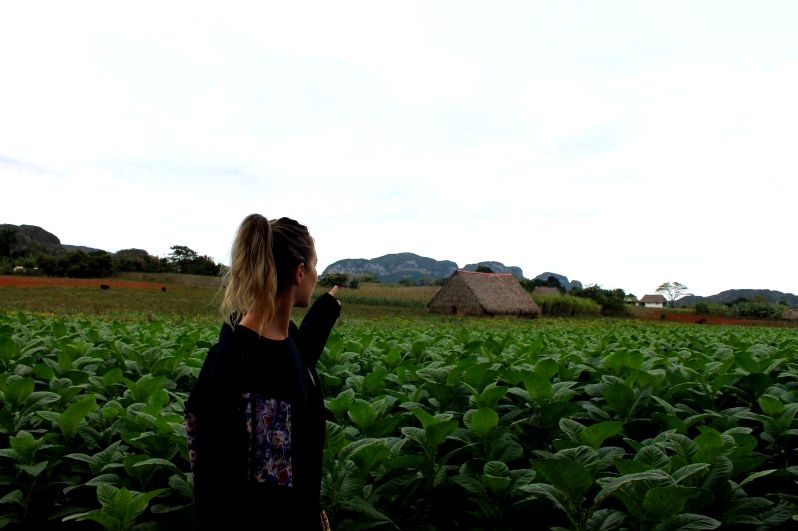 Visiting coffee plantation in cuba, vinales within the far northeastern