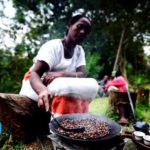 Water wise coffee: developing a more sustainable future in ethiopia